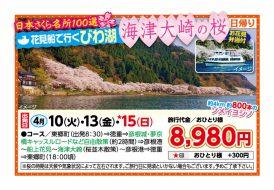 花見船で行く びわ湖 海津大崎の桜