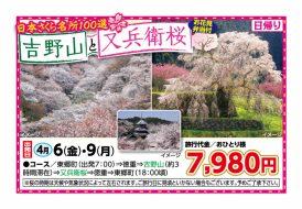 吉野山と又兵衛桜