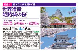 世界遺産 姫路城の桜