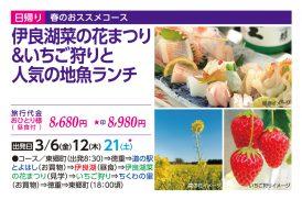 伊良湖菜の花まつり&いちご狩りと人気の地魚ランチ