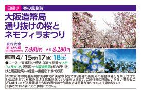 大阪造幣局通り抜けの桜とネモフィラまつり